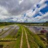 Bali Jatiluwih Rice Terrace Fields