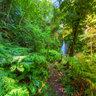 Vanuatu - Tanna Jungle
