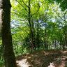 新緑の「飯盛山」Fresh green IIMORIYAMA/Kourankei