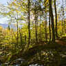 Small waterfall in autumn forest, Bavaria