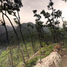 Qianling mountain Peak wild macaques, Guiyang
