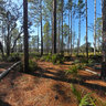 Florida National Scenic Trail, Ocala National Forest, Florida, USA