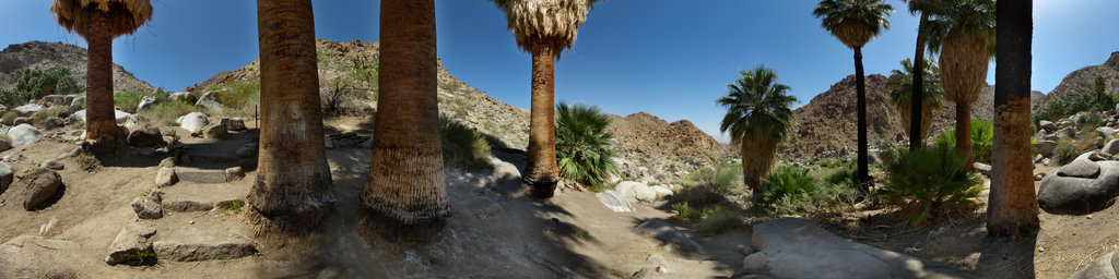 Fortynine Palms Oasis, Joshua Tree National Park, California, USA