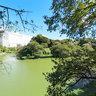 Chidori ga huchi green street