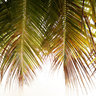 Inside Coconut Tree, Seychelles