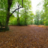 Autumn at the Burnham Beeches, Egypt, England