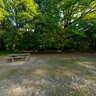 Picnic area in Bayhurst Wood