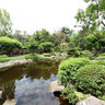 Brisbane Botanic Gardens: Japanese Garden