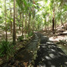Brisbane Botanic Gardens: Subtropical Rainforest