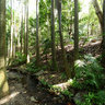 Brisbane Botanic Gardens: Tropical Rainforest