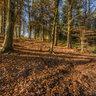 Hopcott Woods