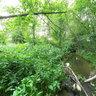 Река Поноша