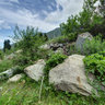 Alma-Arasan ravine, Trans-Ili Alatau