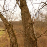 Grand Valley North - 210 Acres for Sale - Field Edge Stand