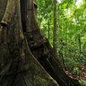 Trail at Aguila de Osa, Drake Bay - Costa Rica