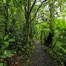 San Ramon Cloud Forest at Villa Blanca, Costa Rica