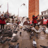 San Marco Pigeons