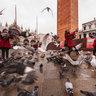 San Marco Pigeons