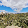 Palmtree forest of Elche from Altamira Palace