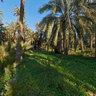 Wild garden, Palmtree Forest of Elche 2, Spain