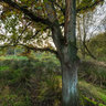 De Rammelaars, autumn evening in the nature reserve ....