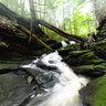 Codfish Falls
