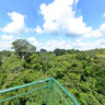 The Rainforest Canopy in Tambopata Peru
