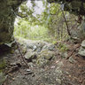 Howe's Cave Entrance