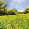 Cowslips near Oakridge, Gloucestershire