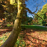 Westonbirt Arboretum, Autumn colour