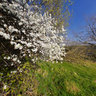 Monkton Combe. Blackthorn, Midford Valley.