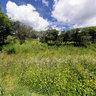 An English Meadow