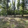 Woods around Lány 1, Czech Republic