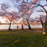 Sunshine in the Cherry Blossom Festival in Washington DC