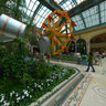 Botanical Garden at the Bellagio, Las Vegas