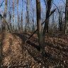 Morton Arboretum - Winter Forest