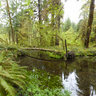 Hoh Rain Forest Olympic National Park Washington