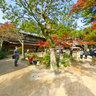 Miyajima Momiji-Valley(2)
