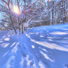 Winter Forest at Niseko