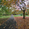 Autumn in Platt Fields Park