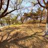 长春朝阳公园----望湖亭东侧林荫道,Changchun chaoyang park
