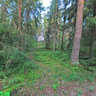 Mihajlovsky groves