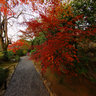   Taizoin Zen Buddhist Temple,autumn colors,Kyoto