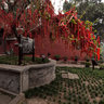 Of 2012-08-26 - Sichuan zitong - seven mountain temple -4-The (Plum Wishing tree)