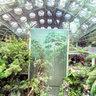 Indoor Rainforest