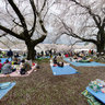 OHANAMI of The koganei-park