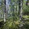 Woods in Gorvaln Nature Reserve, Sweden