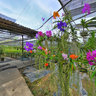 Phuket Orchid Farm 4