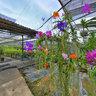 Phuket Orchid Farm 4