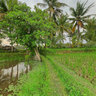 Houses in a rice fields (Ubud, Bali, Indonesia)